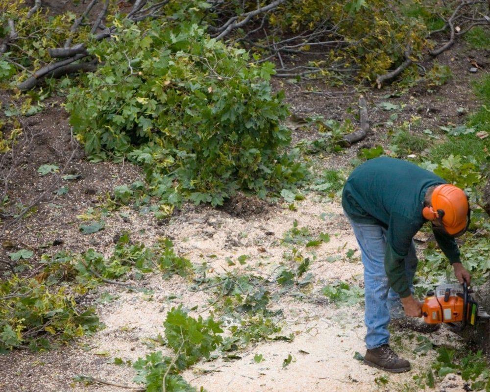 palm tree removal san diego